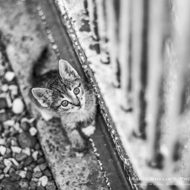 Альбом: Фотосъемка животных, 6 фотографий