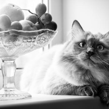 Альбом: Фотосъемка животных, 20 фотографий