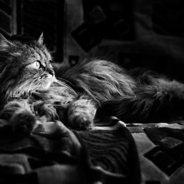 Фотография #695657, автор: Вероника Янина