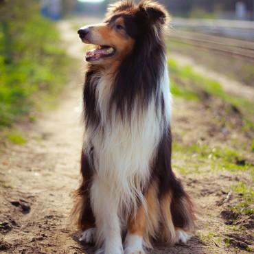 Альбом: Фотосъемка животных, 5 фотографий
