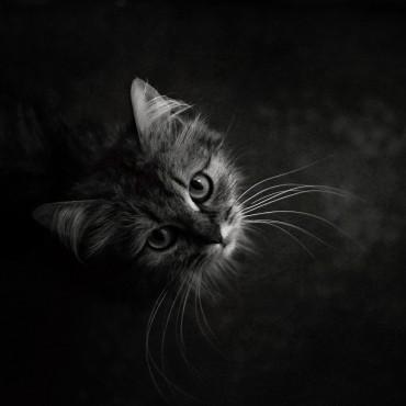 Фотография #695656, автор: Вероника Янина