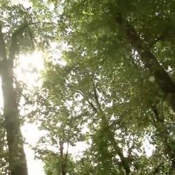 Видео #327376, автор: Валерий Лебедев