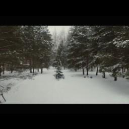 Видео #503196, автор: Виталий Медведев