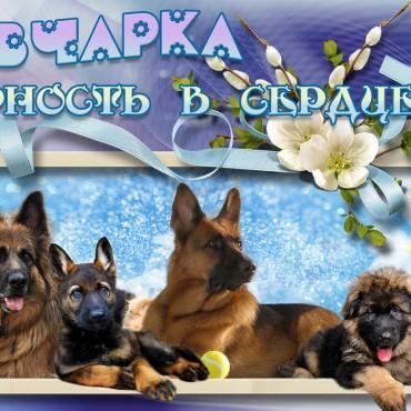 Фотография #527528, автор: Лана Новикова