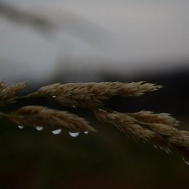 Фотография #77305, автор: Ирина Балахонцева