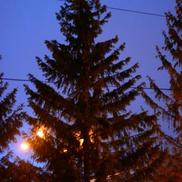 Фотография #105141, автор: Дарья Графова