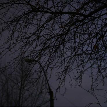 Фотография #105155, автор: Дарья Графова