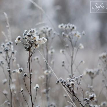 Фотография #105636, автор: Мария Батуева