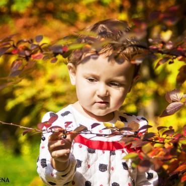 Фотография #87352, автор: Елена Луткова