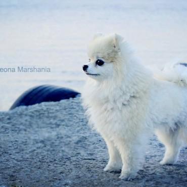 Фотография #106471, автор: Теона Маршания