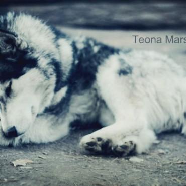 Фотография #106470, автор: Теона Маршания