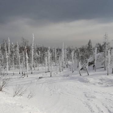Фотография #98605, автор: Дмитрий Алексеев