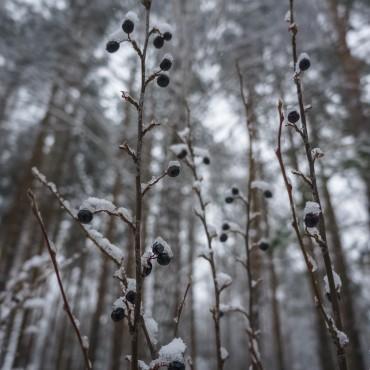 Фотография #104697, автор: Наталия Белозерова