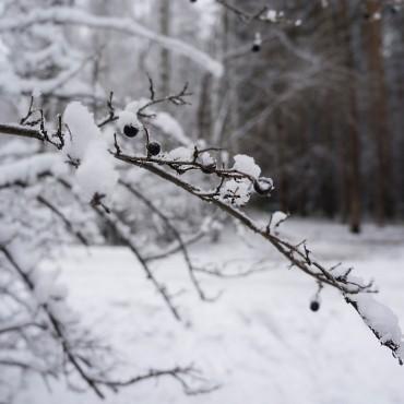 Фотография #104689, автор: Наталия Белозерова