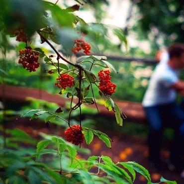 Фотография #406973, автор: Елена Смирнова