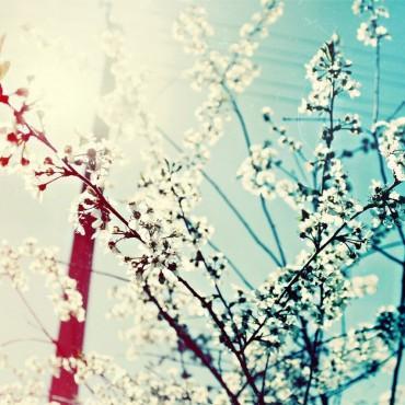 Фотография #209765, автор: Ксения Зимина