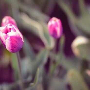 Фотография #210229, автор: Валерия Москалева