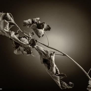 Фотография #211983, автор: Денис Булыгин
