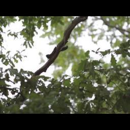 Видео #275630, автор: Дмитрий Блинов