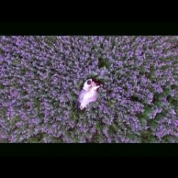 Видео #576018, автор: Снежана Регеза