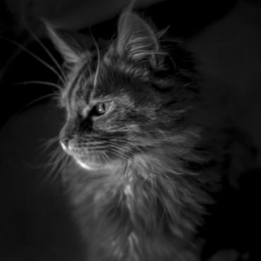 Альбом: Без кота и жизнь не та))), 9 фотографий