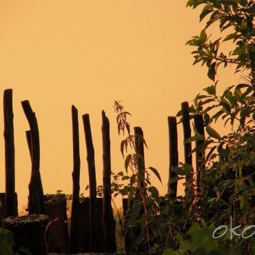 Фотография #394478, автор: Олег Кошкаров