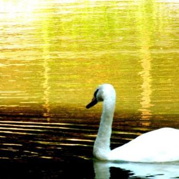 Фотография #303370, автор: Мария Ленская