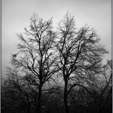 Фотография #312326, автор: ильгам кильдеев