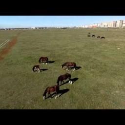 Видео #549506, автор: Александр Тихонов