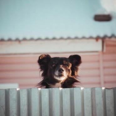 Фотография #7941, автор: Ольга Елина