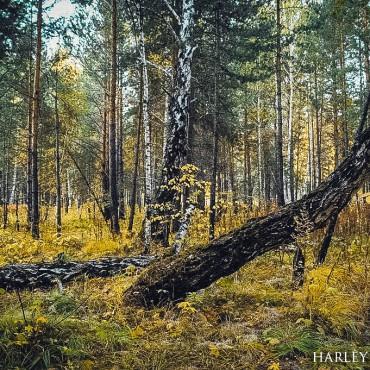 Фотография #465923, автор: Валерия Блинова