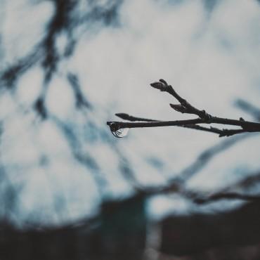 Фотография #465840, автор: Валерия Блинова