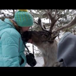 Видео #463084, автор: Татьяна Черкашина