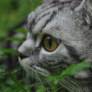 Фотография #332076, автор: Анастасия Лобанова