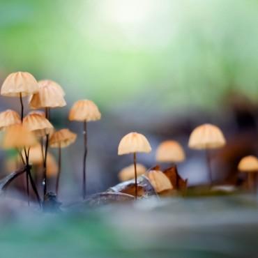 Фотография #568865, автор: Алексей Задворный