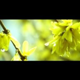 Видео #562008, автор: Артур Лесницкий