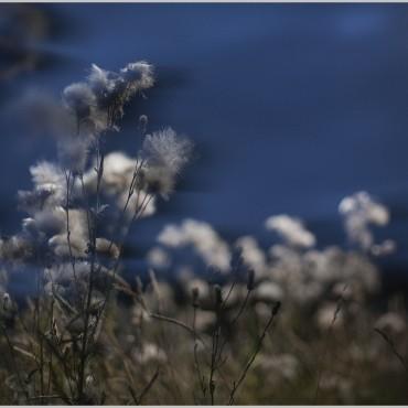 Фотография #109942, автор: Роман Калашников