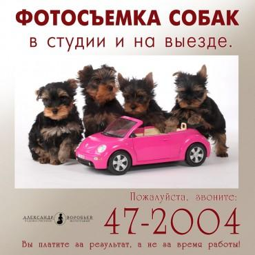 Фотография #122174, автор: Александр Воробьев
