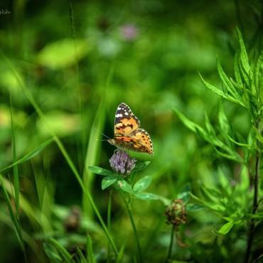 Фотография #122106, автор: Андрей Фоминых