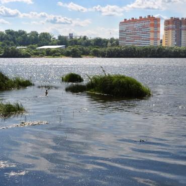 Фотография #119282, автор: Анатолий Медвидь