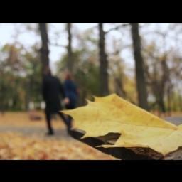 Видео #395897, автор: Юлия Долматова