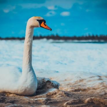 Фотография #145128, автор: Сергей Сергиенко