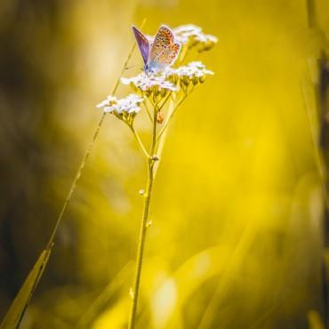 Фотография #145129, автор: Сергей Сергиенко