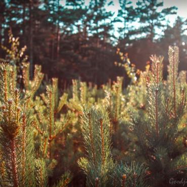 Фотография #145778, автор: Евгений Клецко