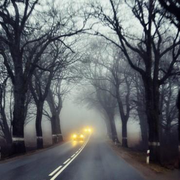 Фотография #144646, автор: Ирина Ден