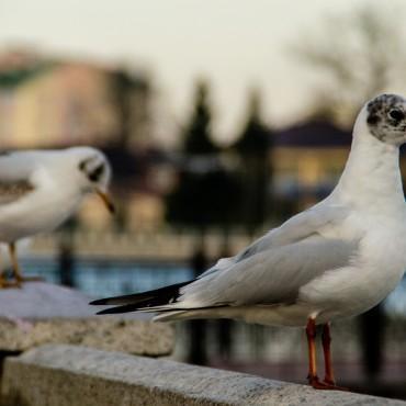 Фотография #144620, автор: Ирина Ден