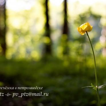Фотография #244293, автор: Александр Р