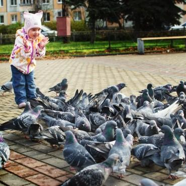 Фотография #244626, автор: Алексей Перегудов